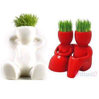 Hairman Magic Grass Plant